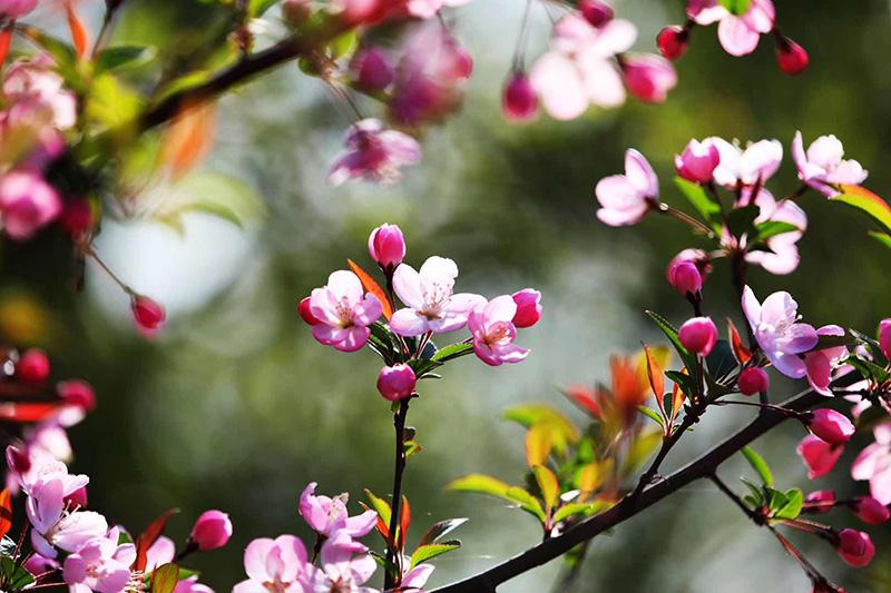 崔顺心摄影作品欣赏:春