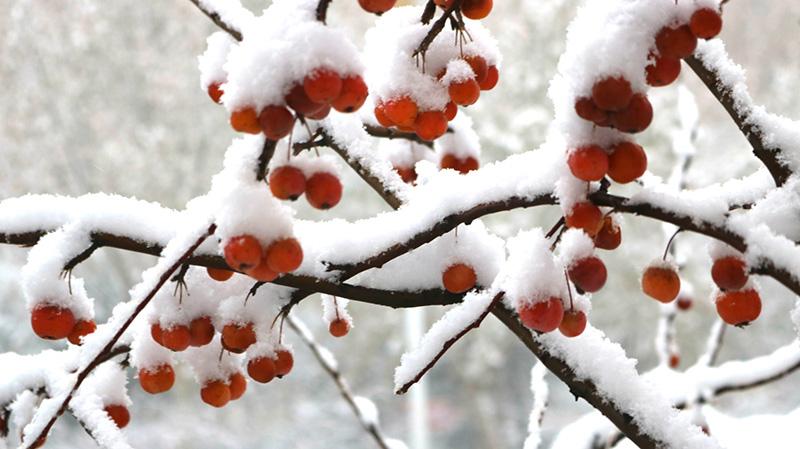 宋增志摄影作品:雪景
